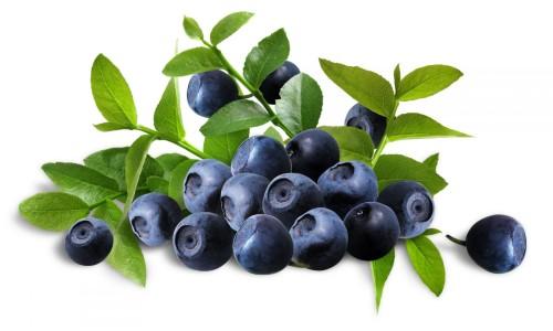Как использовать листья черники при сахарном диабете?